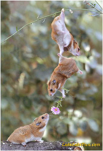 cute-photoshopped-mice-valentines