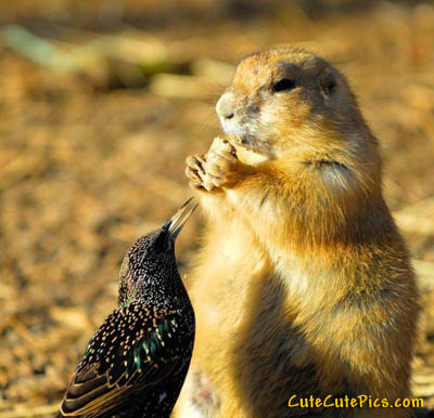 cute-prairie-dog-bird