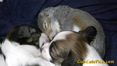 cute-puppies-squirrel