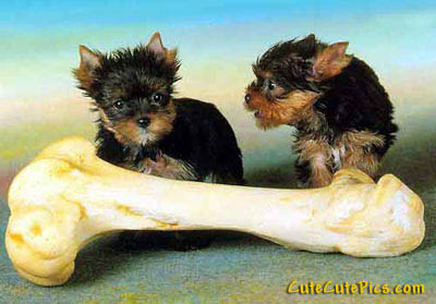 cute-puppies-with-bone