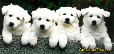 Cute Pictures Of Puppies Kittens Baby Animals Group Of Really