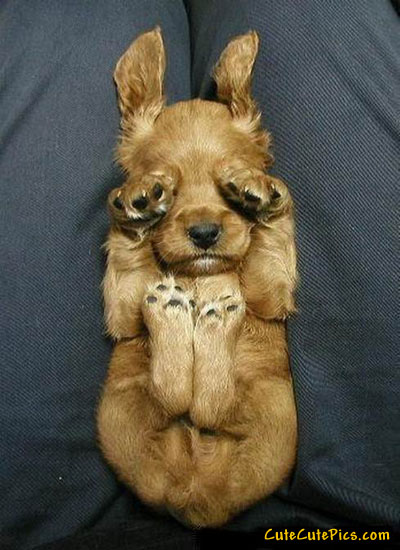 cute-puppy-covering-eyes