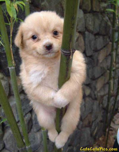 cute-puppy-on-bamboo-tree