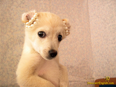 cute-puppy-princess