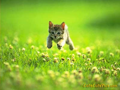 cute-running-kitten-outside-picture