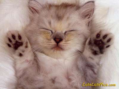 cute-sleeping-kitten-on-back