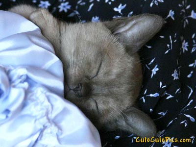 cute-sleeping-kitten-photo