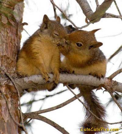 cute-squirrel-kiss