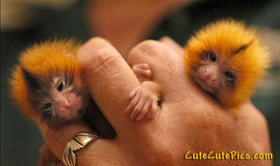 cute-tiny-primates-hand