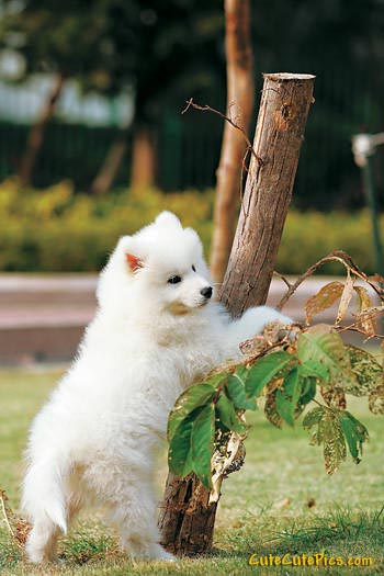 cute-white-puppy-tree