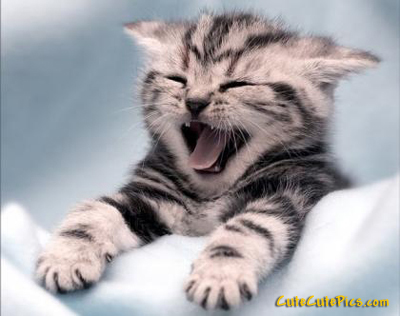 Cute yawning kitten pic