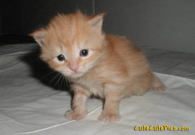 cute-young-kitten