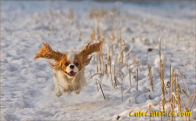 enthusiasm-dog-running