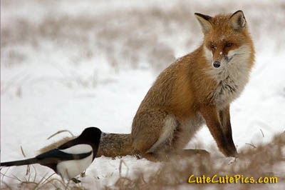 fox-bird-snow