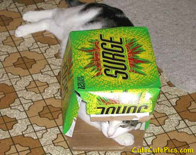 funny-cat-hiding-inside-box