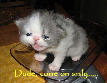 best-lolcats-dude-srsly