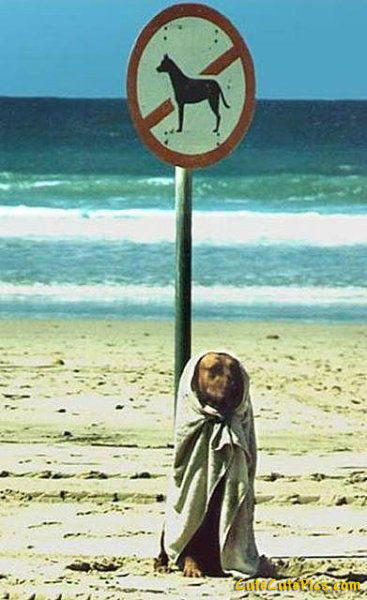 funny-no-dogs-sign