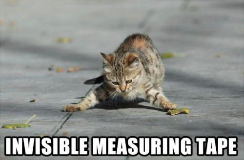 funny lolcats: invisible measuring tape