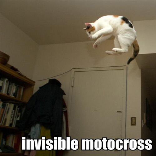 Invisible lolcat motocross bike
