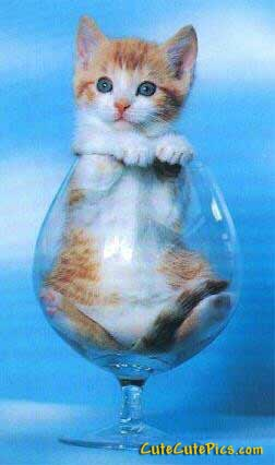 kitten-in-glass-cute
