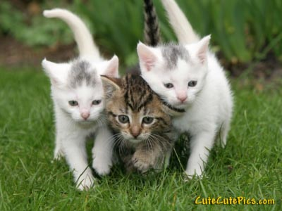 kitten-sandwhich-running-photo