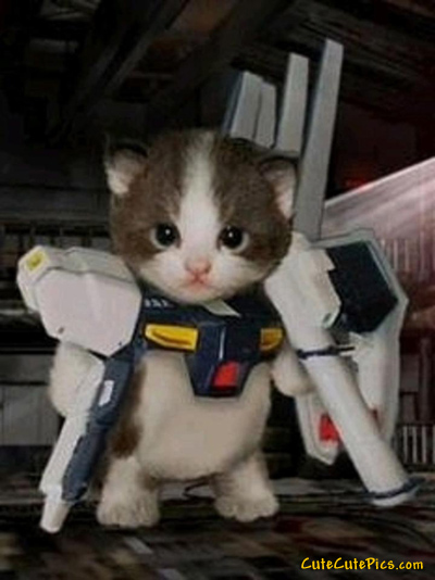kitten-storm-trooper-costume