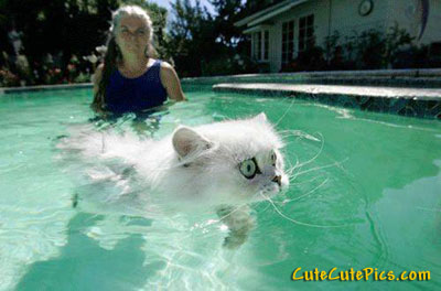 kitty-swimming-pool
