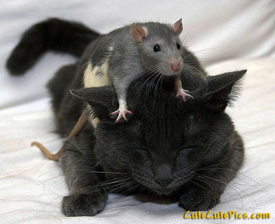mouse-cat-friends