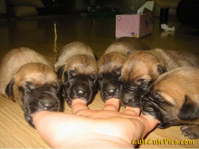 cute images of puppies. A bunch of cute newborn pups. puppies-nursing