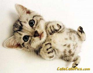really-cute-kitty