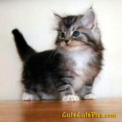 really-cute-sweet-kitten