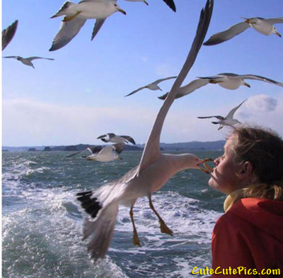 seagull-snatches-food-mouth