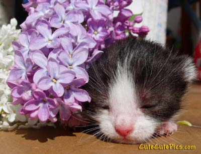 sleeping-kitten-photo-flower