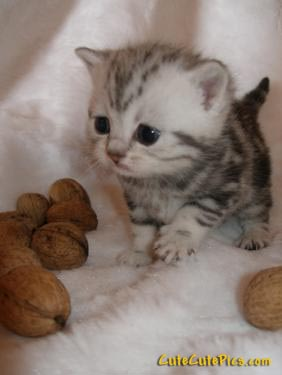 tiny--cute-kittens-pic
