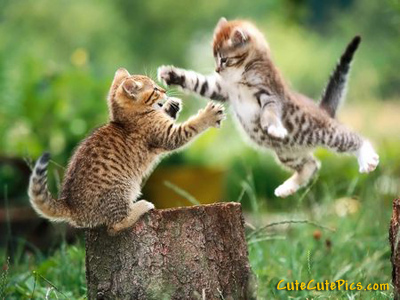two-kittens-playing-outside