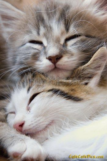 two-kittens-sleeping