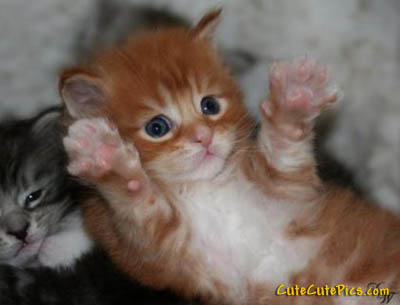 very-cute-kittens-picture