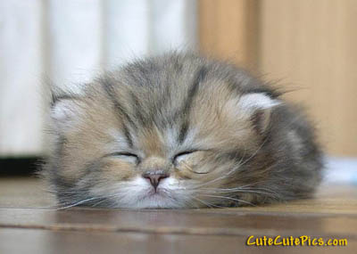 cute-laughing-kitten-picture