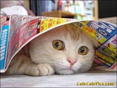 cute-cat-hiding