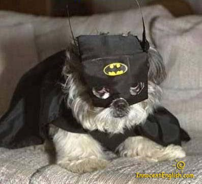 cute-dog-batman-costume