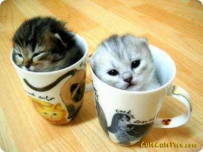 cute-kittens-in-cups-pics