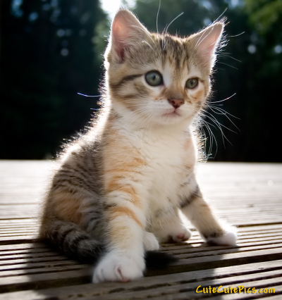 cutest-kitten-ever-photo