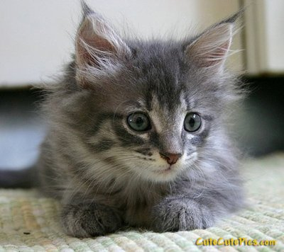 really-cute-kitten-aww