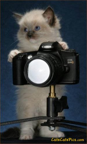 standing-kitten-taking-picture
