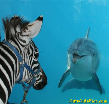 zebra-and-dolphin-friends
