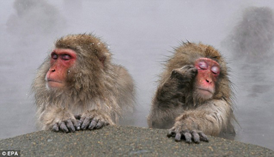 monkey-in-hotspring2