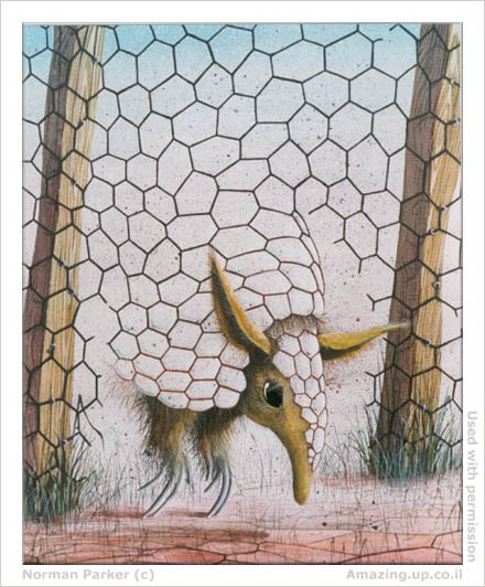 armadillo wall illusion