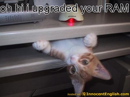 cat-fixing-your-ram