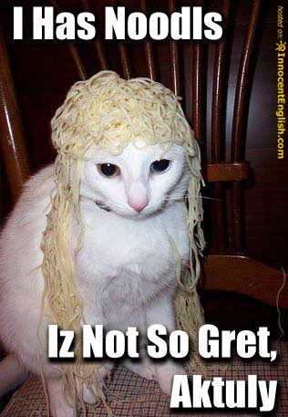 cat-with-noodles