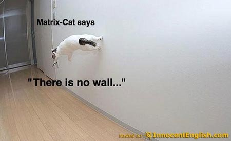 cute-cat-doing-walking-on walls